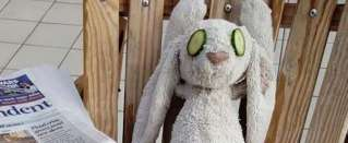 Hotel giving VIP service to lost bunny