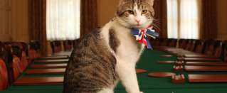 A win for Remain! Larry the cat can stay