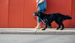 Double leash lets dogs walk themselves