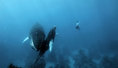 Free Diving with Wildlife