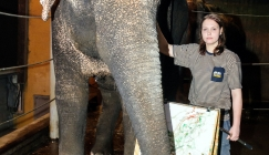Amazing Animals - Elephant's paintings sell for thousands