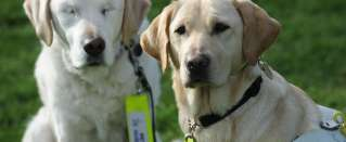 Amazing Animals - Blind dog gets own guide dog