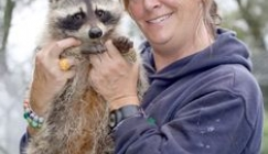 Amazing Animals - The badger that turned into a raccoon